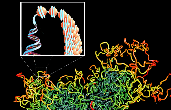 Epigenetics at CGS involves EPIC, DNA methylation arrays, histone methylation and modifications and ATAC Seq for open chromatin detection.